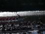 Toller 3.-ter Platz beim Drachenboot Cup 2014